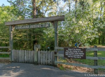 Entrance to the Louisiana State Arboretum