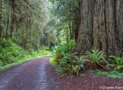 The Lost Man Creek Trail in Redwood National Park