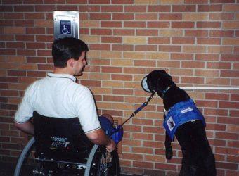 Delta Unveils New Service Animal Policies
