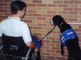 Service animal opening a door