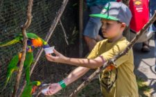 Feeding lorikeets at Tanganyika Wildlife Park in Witchita, Kansas