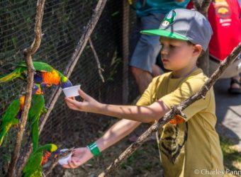 Feeding lorikeets at Tanganyika Wildlife Park in Witchita, Kansas