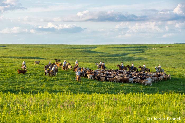 Round-up behind the stage at The Symphony in the Flint Hills
