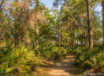 The Jeffery Friend Trail at Bon Secour National Wildlife Refuge