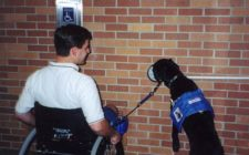 Delta Unveils New Service Animal Policies