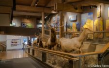 Exhibits in the Jackson Hole