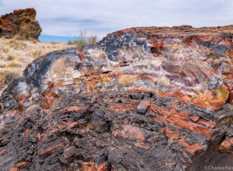 Arizona's Petrified Forest — A Grand Road Trip Stop