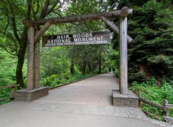 Start of the Redwood Creek Trail in wheelchair accessible Muir Woods National Monument