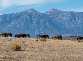 minden-wild-horses-featured